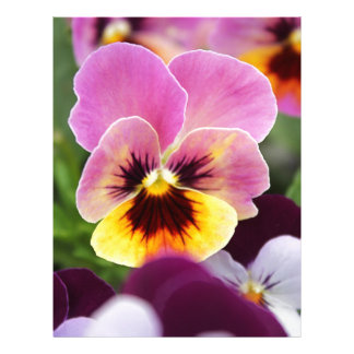 Colorful Pink and Yellow Pansy Flower Letterhead