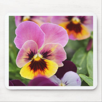 Colorful Pink and Yellow Pansy Flower Mouse Pad