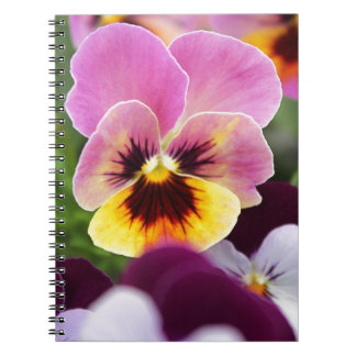 Colorful Pink and Yellow Pansy Flower Notebook