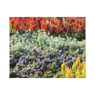 Colorful Plants Photo Wrapped Canvas Print