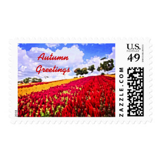 Colorful Plumed Cockscomb Field Vibrant Flowers Postage