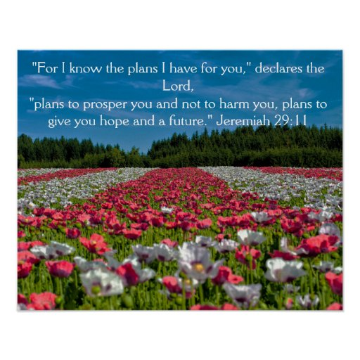 Colorful Poppy Field Photo Bible Verse Poster Poster
