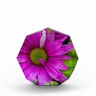 Colorful Purple Daisies Acrylic Award