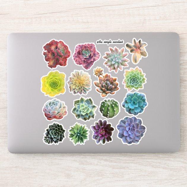 Colorful Rainbow Succulents Sticker Zazzle Com
