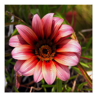 Colorful Red/Orange Daisy Poster