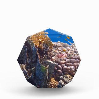 colorful red sea acrylic award