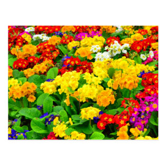 Colorful Red, Yellow, purple White Flowers Postcard