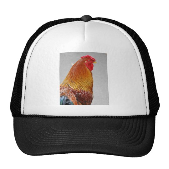 colorful rooster trucker hat