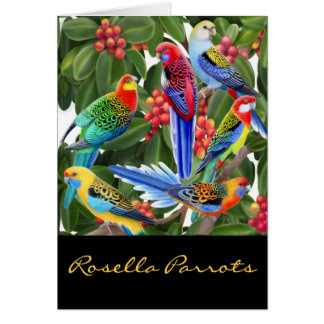 Colorful Rosella Parrots Card