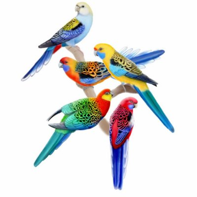 Colorful Rosella Parrots