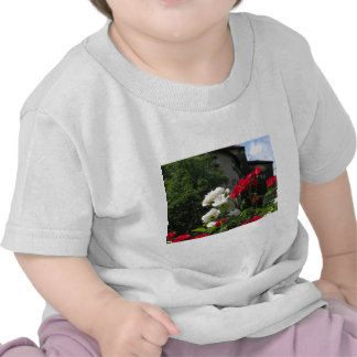 Colorful roses in castle's garden shirts