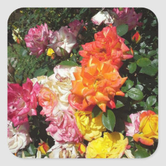 Colorful Roses Square Sticker