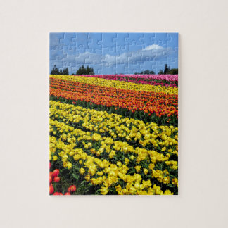 Colorful rows of tulips puzzles