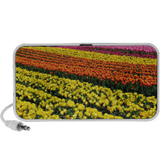 Colorful rows of tulips travelling speaker
