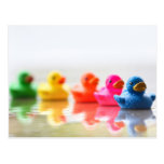 Colorful Rubber Ducks Postcard