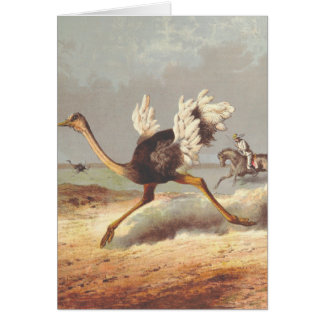 Colorful running ostrich illustration card