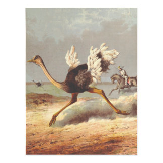 Colorful running ostrich illustration card postcard