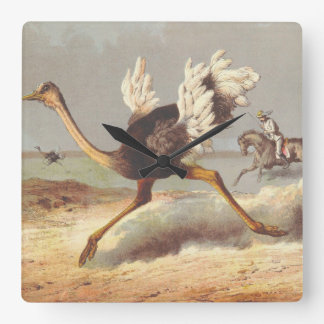 Colorful running ostrich illustration clock