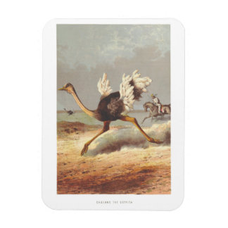 Colorful running ostrich illustration magnet