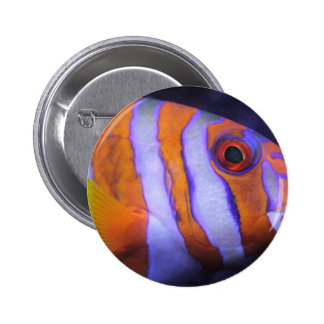 Colorful saltwater fish 2 inch round button