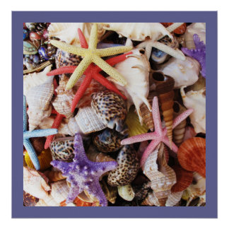Colorful Sea Shell POSTER