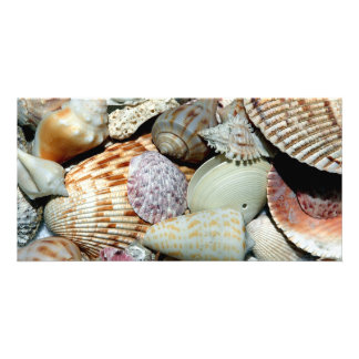 Colorful Sea Shells photo card
