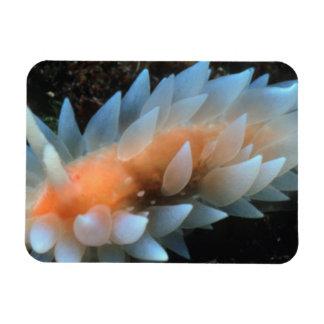 Colorful Sea Slug Sitting On The Surface Rectangular Photo Magnet