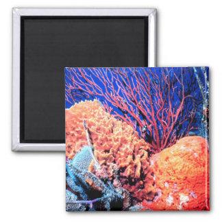 Colorful Sea Sponge Magnet