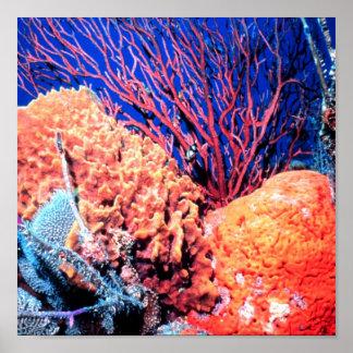 Colorful Sea Sponge Poster 15x15