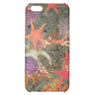Colorful Sea Stars iPhone 5C Cover