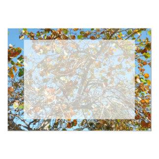 Colorful seagrape tree against blue florida sky card