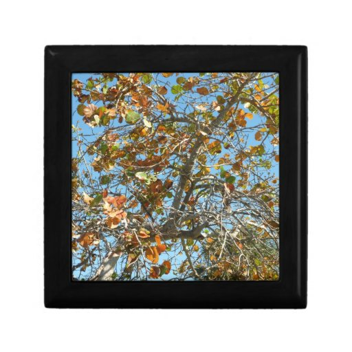 Colorful seagrape tree against blue florida sky gift boxes