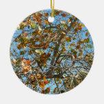 Colorful seagrape tree against blue florida sky ornaments