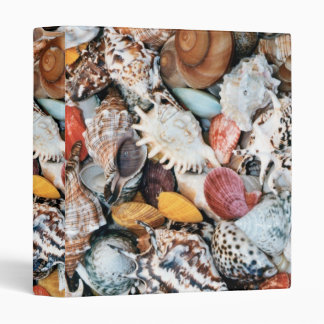 Colorful Seashells Binder