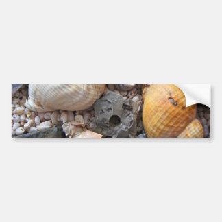 Colorful Seashells Bumper Sticker