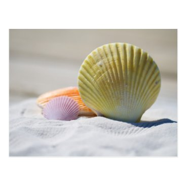 Beach Themed Colorful Seashells in the Sand Postcard