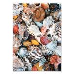 Colorful Seashells Photo Print