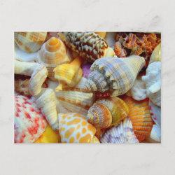 Colorful Seashells postcard