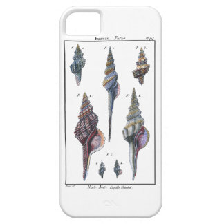 Colorful Seven Seashells iPhone 5 Cover