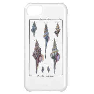Colorful Seven Seashells Case For iPhone 5C