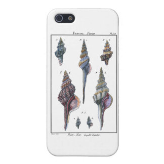 Colorful Seven Seashells iPhone 5 Cases