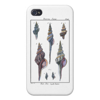 Colorful Seven Seashells iPhone 4 Cases