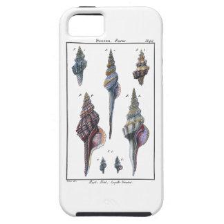 Colorful Seven Seashells iPhone SE/5/5s Case