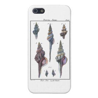 Colorful Seven Seashells iPhone SE/5/5s Cover