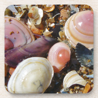 Colorful Shells Beverage Coasters