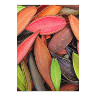 Colorful Shells Nature Harvest Seed Pods Card