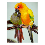 Colorful Shelter Bird Postcards