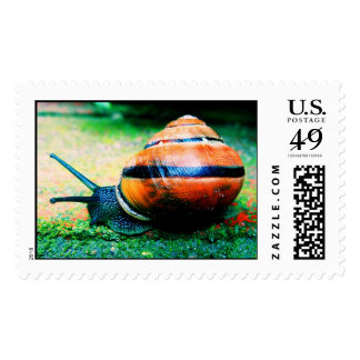 Colorful Snail 2 Postage