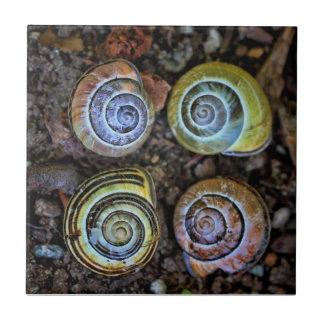 Colorful Snail Shells Picture Tiles