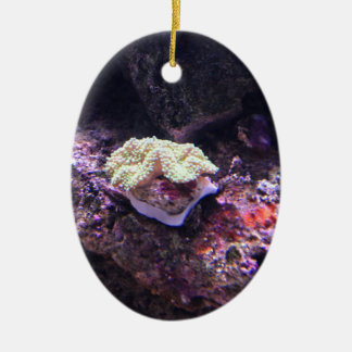 Colorful Soft Coral And Live Rocks Ceramic Ornament